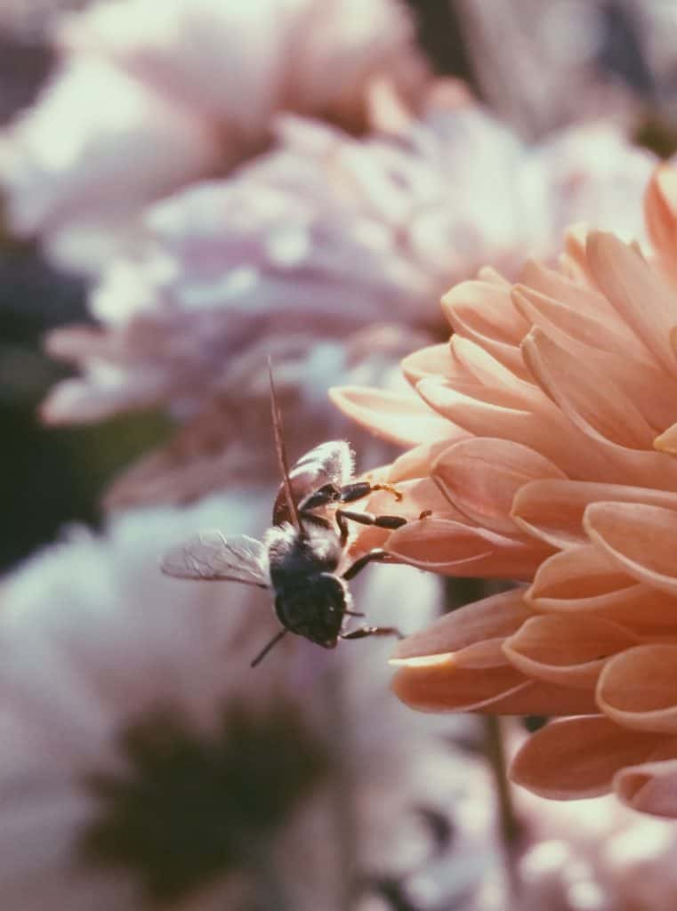 we are bees and the flower